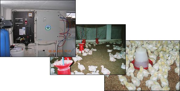 Granja avícola en Argelia